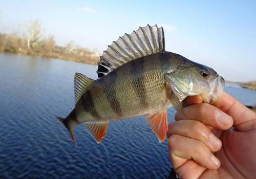 клев рыбы в крыму